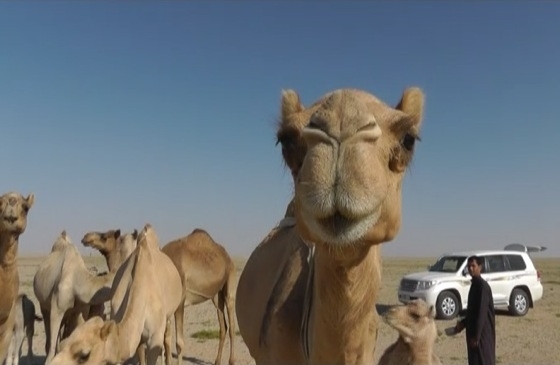 Video: The Jiddat il-Harasiis (Empty Quarter)