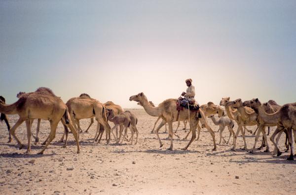 Simple CamelCaravanLibya1jpeg