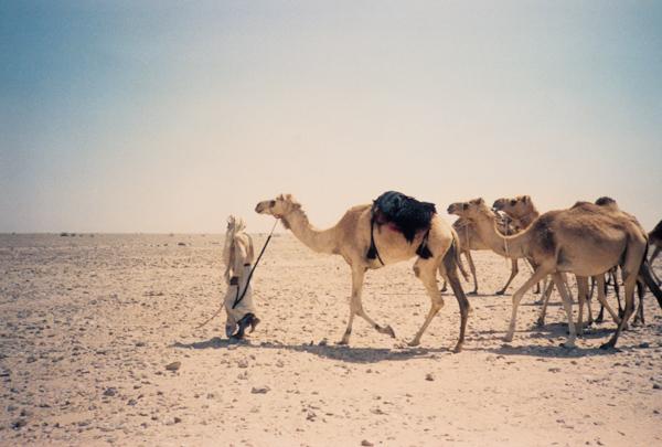 Beautiful Camel Caravan Related Keywords Amp Suggestions  Camel Caravan Long Tail