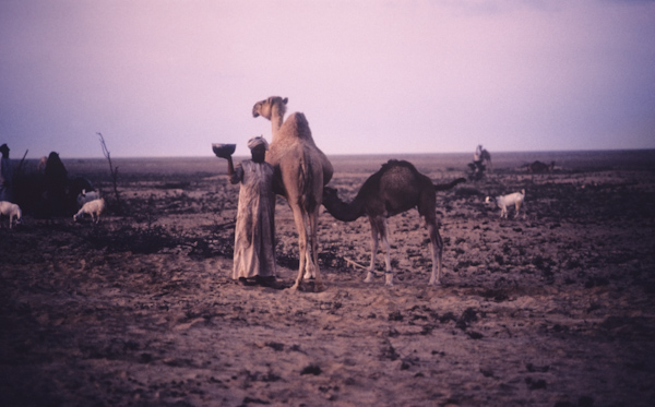 Preparing for a camel race — Nomads in Oman