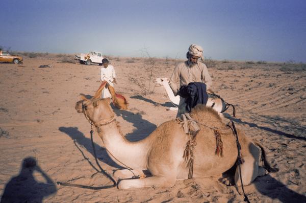 Saddling up for camel races