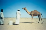Watering a camel
